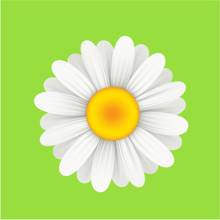 camomiles macro: Camomile flower on a green background. Vector illustration. Illustration