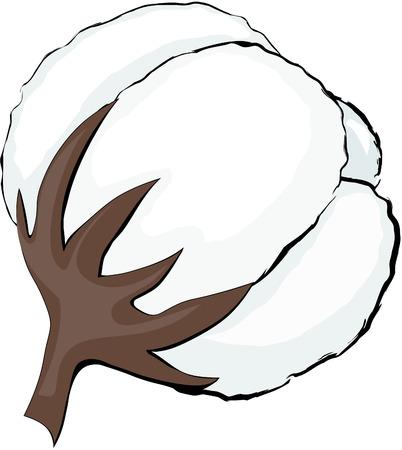 cotton: Cotton. Illustration