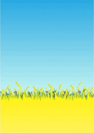 Blue  cornflowers in a wheat field. Stock Vector - 6401573