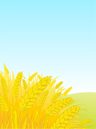 Ripe rye against the blue sky Stock Vector - 6596208