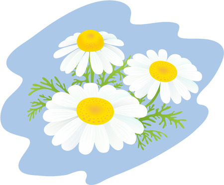 Flowers of camomiles on a blue background Stock Vector - 6900912