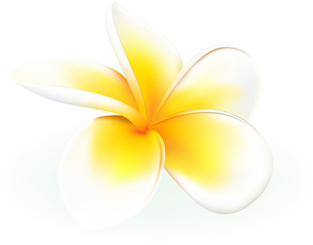 hawaiian: frangipani