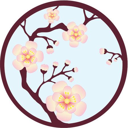 Sakura sboccia sull'albero