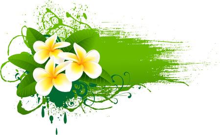 plumeria flower:  Banner with frangipani Illustration