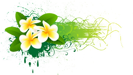 Banner with frangipani Stock Vector - 7754683