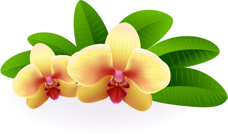 thai orchid: Beautiful Orchid.