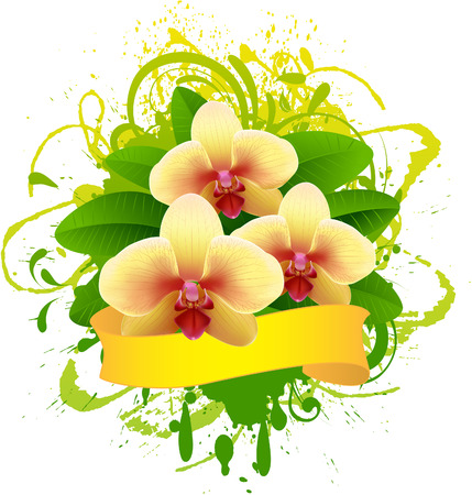 thai orchid:  Banner with orchid. Illustration