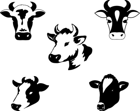 cow head: Icon of a cow Illustration