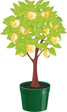plant pot: Monetary tree