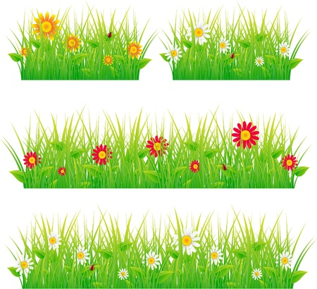 hedges: Summer meadow beautiful. Illustration