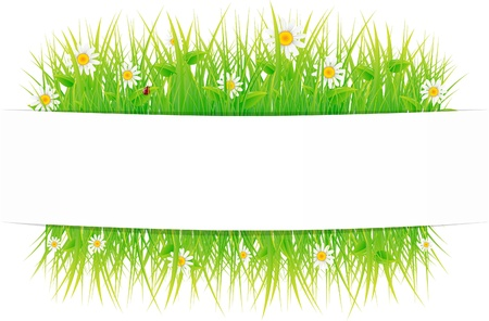 Summer meadow beautiful. Stock Vector - 9572126