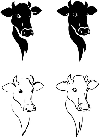 cow head: Cow. Illustration