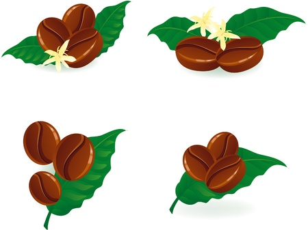 Grains of coffee with foliage and flowers. Vector