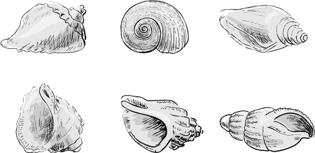 conch: Set From Cockleshells  Illustration