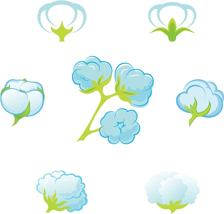 cotton plant: Cotton. Illustration
