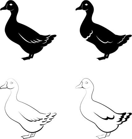ducks Vector