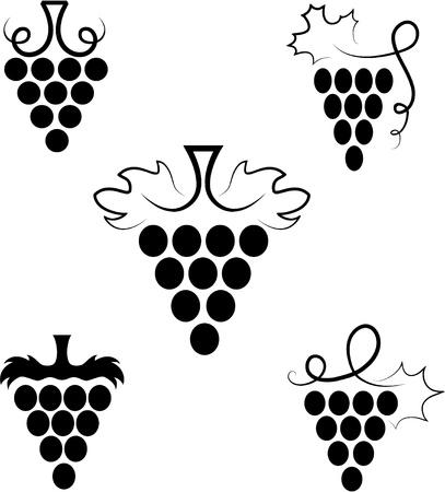 vine  plant:  Grapes Illustration