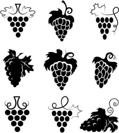 Grapes Illustration