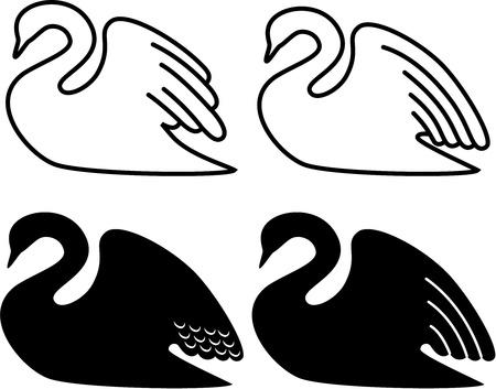 swimming swan: swan