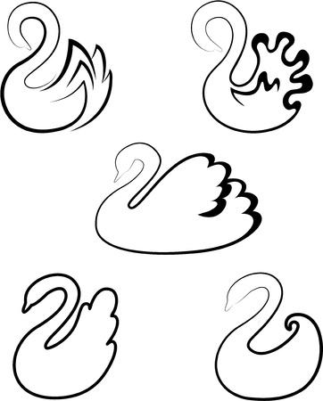 trumpeter swan: swan
