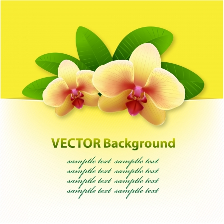 banner with orchids, floral vector background Vector