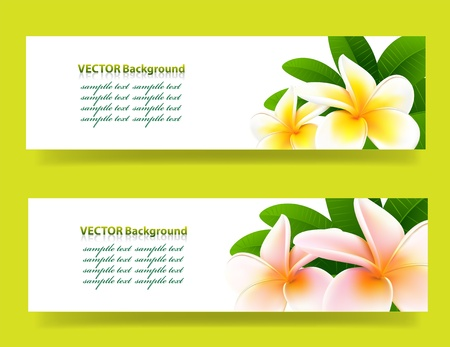 banner with orchids, floral vector background Stock Vector - 18871549