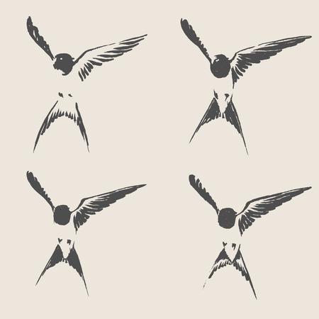 golondrinas: Dibujado a mano ilustración vectorial golondrina. Estilo de sombreado Doodle.