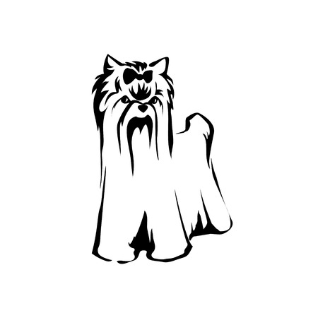 yorkshire terrier: Vector dog Yorkshire terrier icon. Cute Dog