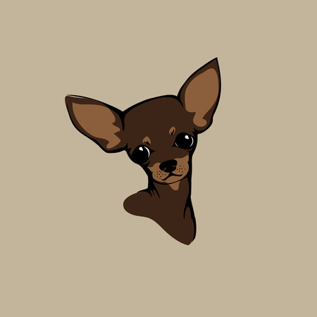 dog breeds: The head of chihuahua dog. Dog vector illustration. Illustration