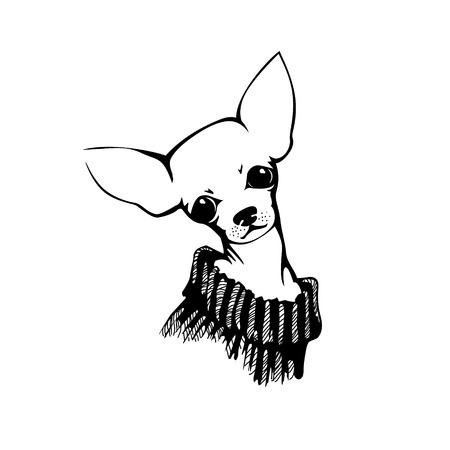 cane chihuahua: La testa di cane chihuahua. Cane illustrazione vettoriale.