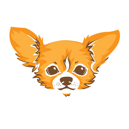 chihuahua dog: The head of chihuahua dog. Dog vector illustration. Illustration