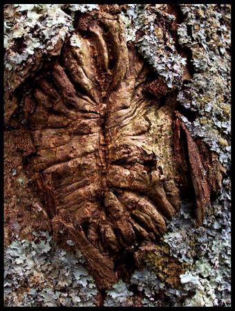 tree bark face Stock Photo - 797160