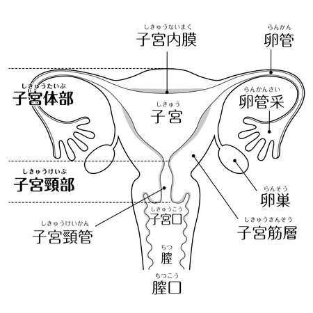 Human body (structure of uterus)