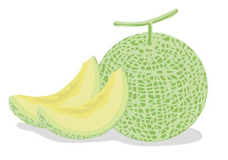 Illustration of a fresh melon of fruits 向量圖像
