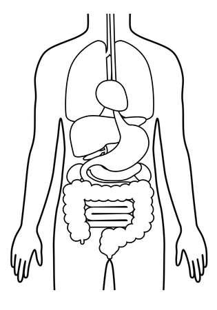 Human body (structure of internal organs) digestive system  Male body Illusztráció