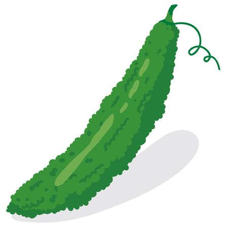 Illustration of fresh vegetables (Bitter gourd)