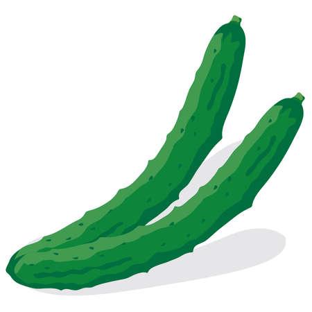 Illustration of fresh vegetables (Cucumber)