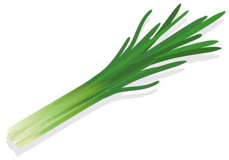 Illustration of fresh vegetables (Chinese chive)