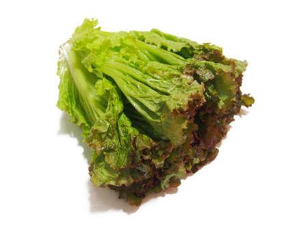 Fresh lettuce (sunny lettuce) Vegetable material photo