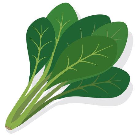 Vegetables Komatsuna (healthy food illustration)