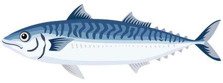 Illustration of fish (mackerel) seafood