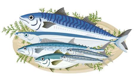 Sea creatures, sea food (blue fish in a colander)