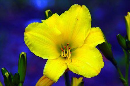 Vibrant yellow flower