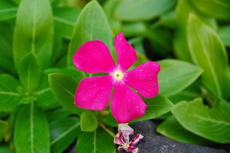 Vibrant pink flower Banco de Imagens