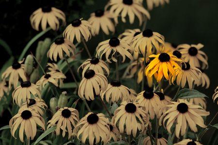 Single yellow flower Banco de Imagens