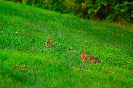 Rabbits in field Banco de Imagens