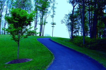 Blue vibrant path in forest
