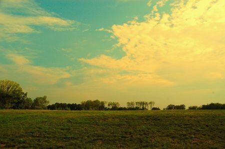 Open summer day field