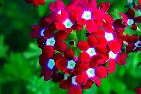Vibrant red white and green flower Banco de Imagens