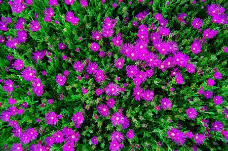 Group of purple flowers
